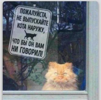 Кошки – инопланетяне?