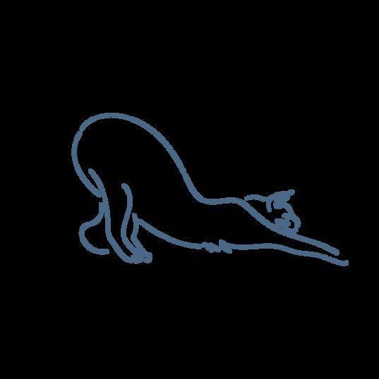 stretch like a cat