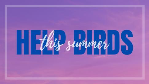 HELP BIRDS THIS SUMMER