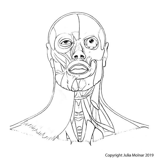 Modern Human Head Illustration by Julia