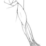 Modern Human Arm Illustration by Julia M