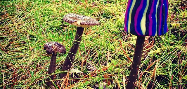 🍄_This one has spots that  glows in the