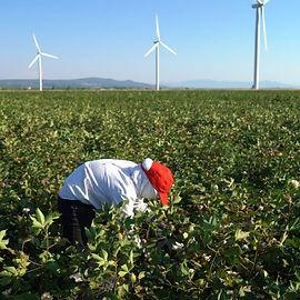 organic-cotton-07-480x480.jpg