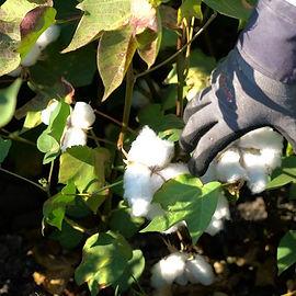 organic-cotton-06-480x480.jpg