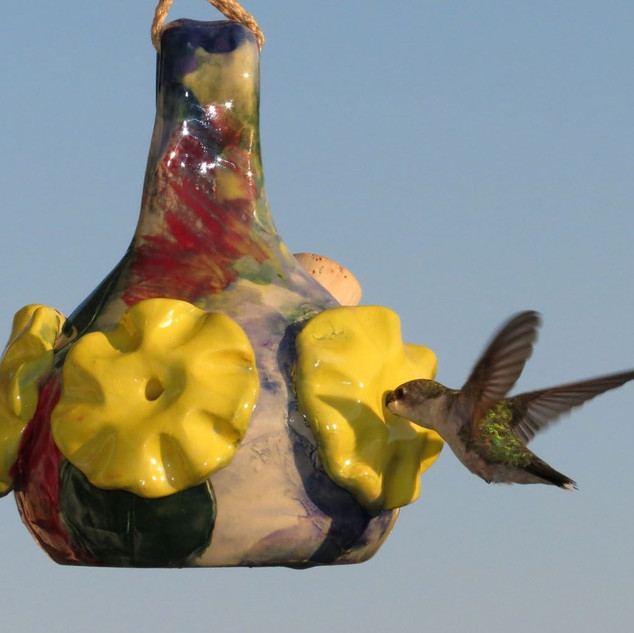 closerl Large Yellow Flower Hummingbird