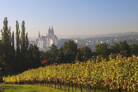 vineyard-1665549_1920.jpg