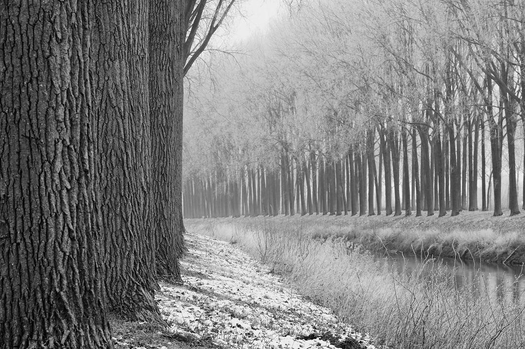 Canal mystique