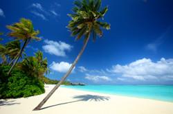 True paradise