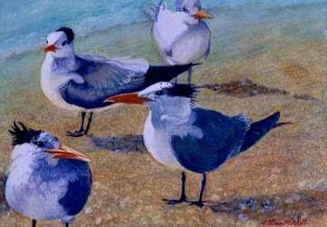 Whose Tern