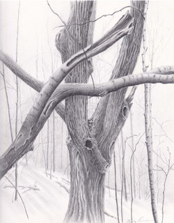 The Ghost Eye Tree