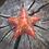 Thumbnail: Orgone Energy Pocket Stars