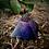 Thumbnail: Orgone Energy Mini Pyramids