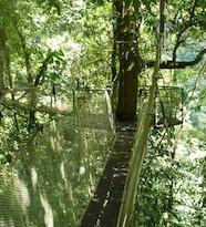 Canopy Platforms