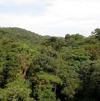 Monteverde Canopy