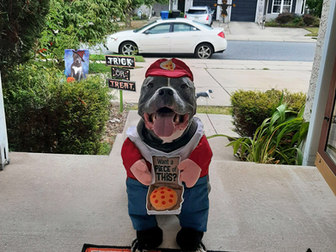 Pizza delivery pit bull by Bitey