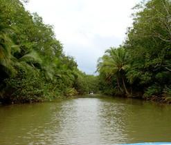 Isa Damas Mangroves