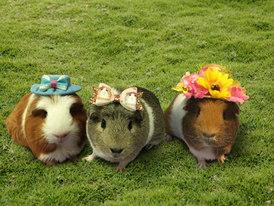 Pretty by piggies