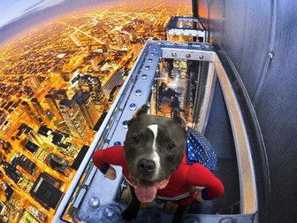 Super pitbull by Bitey
