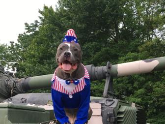 America's dog by Bitey
