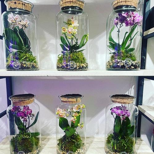 Phaleo terrarium