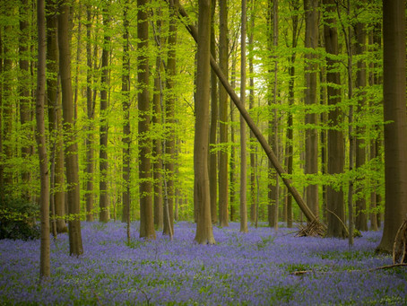 Nature can save more lives, promote more health and relieve more stress than the health sector