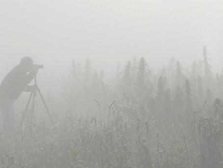 Sneak Peak - Our Next Subject Down at the Farm