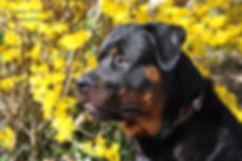 Hundesitting Hundebetreuung Dogsitting Hundepension Schwerzenbach Uster Fällanden Dübendorf Greifensee Nänikon Gutenswil Kindhausen Fehraltorf Riedikon Gossau Wetzikon Uster