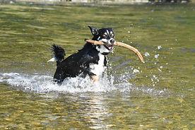 Hundesitting Hundebetreuung Dogsitting Hundepension Schwerzenbach Uster Fällanden Dübendorf Greifensee Nänikon Gutenswil Kindhausen Fehraltorf Riedikon Gossau Wetzikon Uster Zürich Oberland
