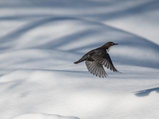 Parc National d'Hossa, Finlande