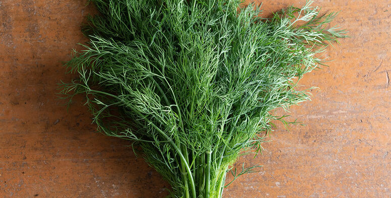 Fresh picked Dill