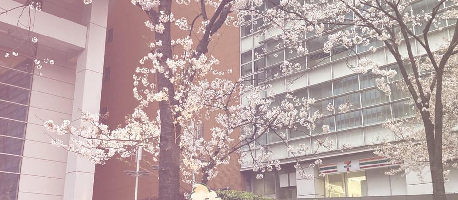 春ですね〜。