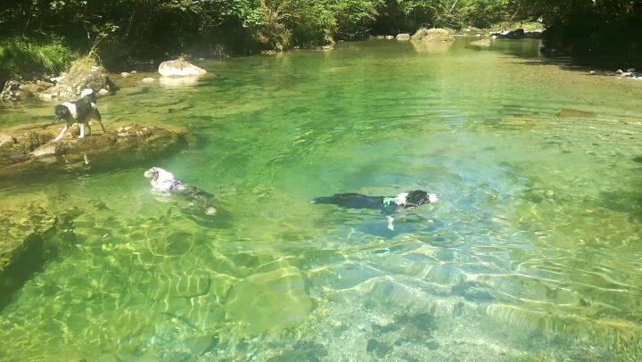 #SinFiltros 🏞 Recordando una de las excursiones de las vacaciones, el río Dobra, un paraíso, con un agua cristalina... 💙💙 #NoTenemosPerrosTenemosNutrias #BoderNutria  💙💚💛💜❤💙💚💛💜❤💙💚💛💜❤ ______________________________ #BorderCollie #bordercolliethebest #