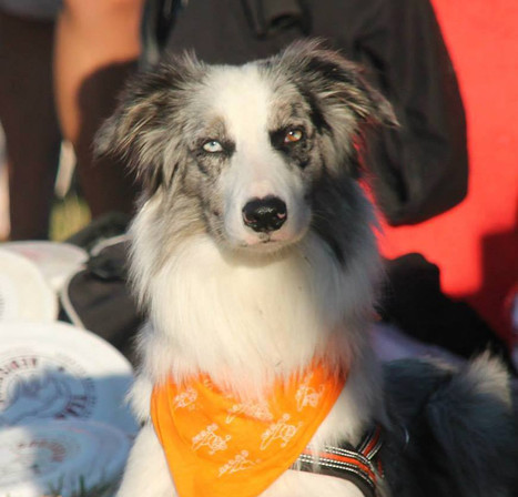 Winter RRC 0139436, Border Collie.jpg