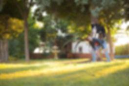 criadero de border collie en madrid.jpg