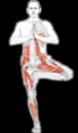 Yoga anatomy articles