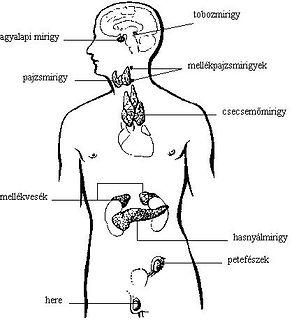 Hormon jóga Budapesten