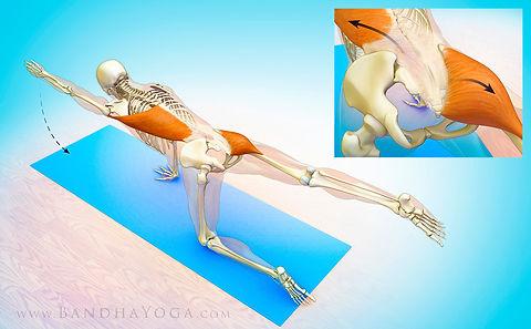 Yoga anatomy Budapest