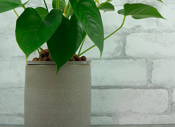 Six Inch Planter Kit in Dove Grey