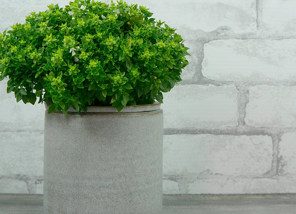 Six Inch Planter Kit in Soft White