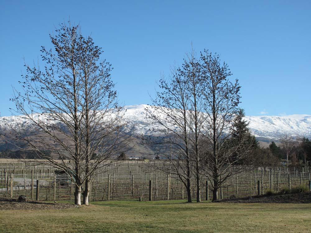 Vineyard & mountain views