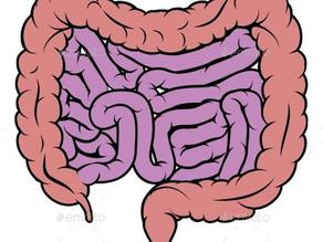 Gut health and Oestrogen