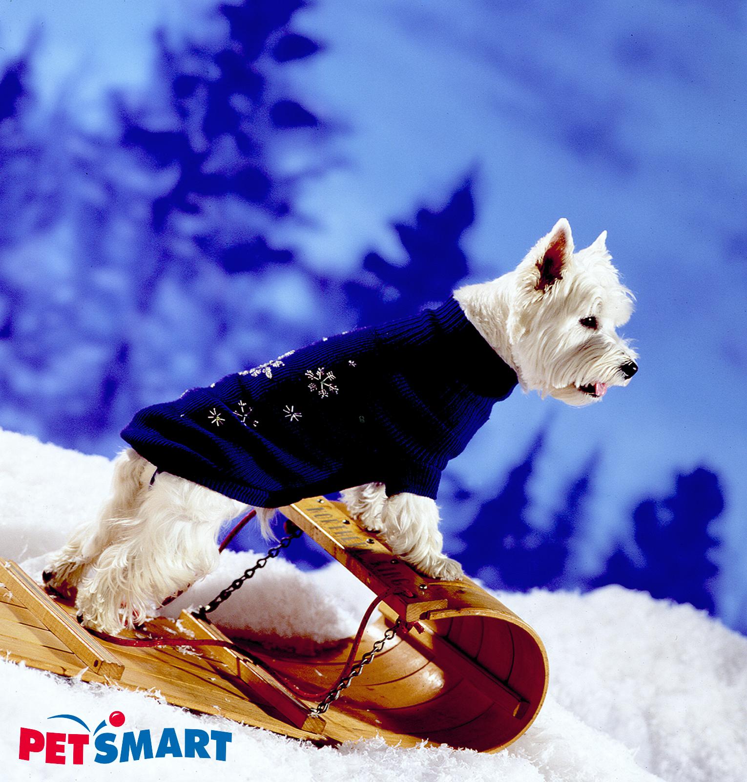 Petsmart Down Hill Dog