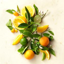 Orange Lime Still Life