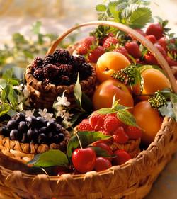 fruitbasket_WEB