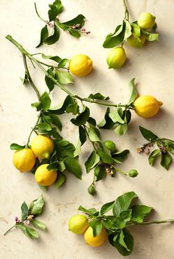 LemonBotanical