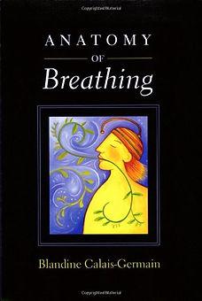 Anatomy of breathing 3.jpg