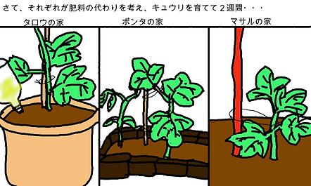 さて、それぞれが肥料の代わりを考え、きゅうりを育てて2週間・・