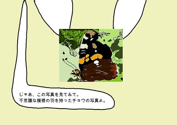 じゃあ、この写真を見てみて。不思議な模様の羽を持った蝶の写真よ。