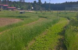 Fields9