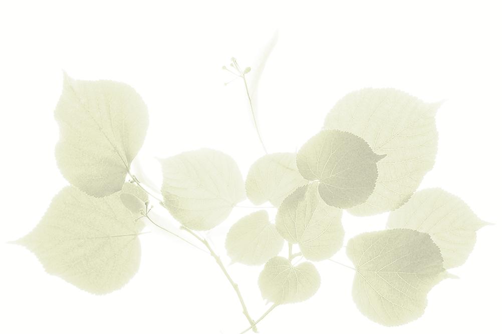 leaf.ghost.png